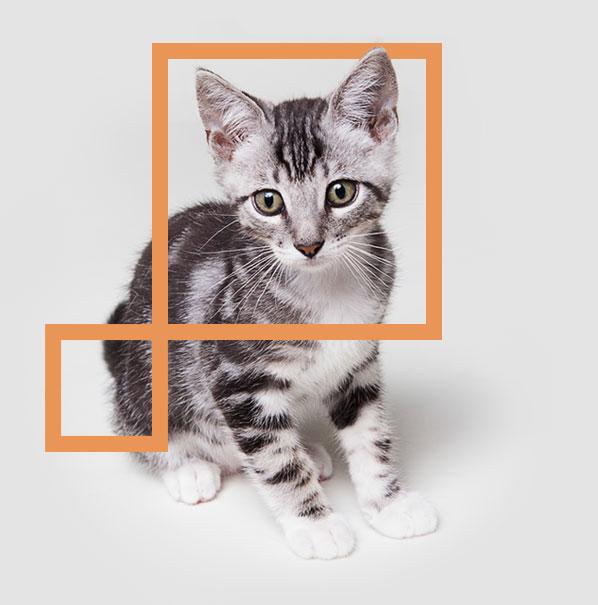 home_animals_cat